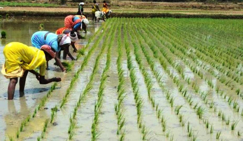 agriculture development and industrial policy pratisruti plus